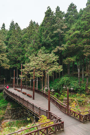 Landscape of the misty cypress and cedar forest and bridge in Alishan National Forest Recreation Area in winter in Chiayi County, Alishan Township, Taiwan. Фото со стока