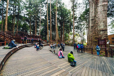 Thousand year cypress with tourist in waiting area in Alishan National Forest Recreation Area in winter in Chiayi County, Alishan Township, Taiwan.