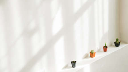 Clean, white indoor wall with sunlight shadow cast on, decorated with small cactus in pots on the building beam. Minimal home interior decorating ideas. Background with copy space.