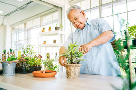 Asians retired grandfathers love to take care of the plants by scooping the soil in preparation for planting trees. Retirement activities.