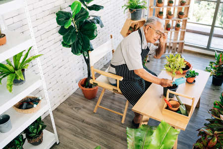 An Asian grandfather loves to take care of the plants, adjust eyeglasses to see detail of plants in an indoor garden in the house with happiness. Elderly retirement activities leisure and lifestyle. 免版税图像