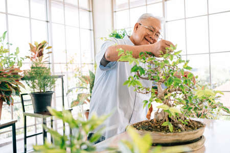 Asian retired grandfather loves to take care of the plants in an indoor garden in the house with a smile and happiness. Retirement activities. 免版税图像 - 163565736