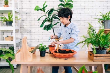 An Asian male kid enjoys taking care of the plants by scooping soil in the pot to prepare for planting in an indoor houseplant at home. Playing by study activities. Child leisure and lifestyle.