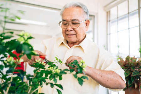 Close-up an Asian retired grandfather loves to take care of the plants in an indoor garden in the house with a smile and happiness. Retirement activities. 免版税图像