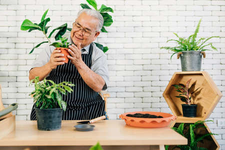 An Asian retired grandfather loves to take care of the plants, holding plants in pots with happiness Retirement activities. 免版税图像