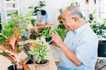 Asian retirement grandfather live on a tablet to sell plants. Enjoy taking care of plants. Retirement hobby and lifestyle. Grandfather work from home. Concept of quarantine.