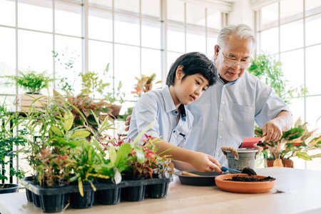 An Asian retired grandfather and his grandson spend quality time together at home. Enjoy taking care of the plants by scooping soil to prepare for planting. The family bond between children and adults