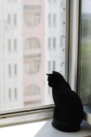 the black cat sits near the window and looks out the street