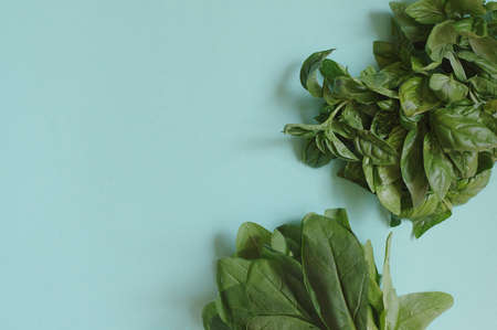 Green fresh basil and spinach on the blue background