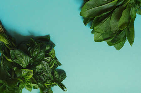 Green fresh basil and spinach on the blue background Imagens