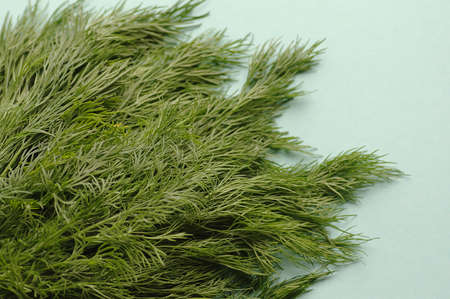 a macro bunch of green fresh dill on the blue background. Healthy food, raw and vegetarian Imagens