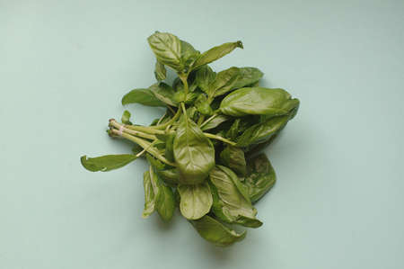 A macro bunch of green fresh basil on the blue background. Healthy food, raw and vegetarian Imagens