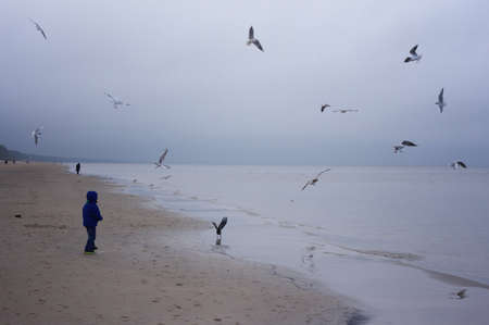 A cheerful boy feeds gulls on the seashore in winter, spring or autumn. many gulls are flying around.