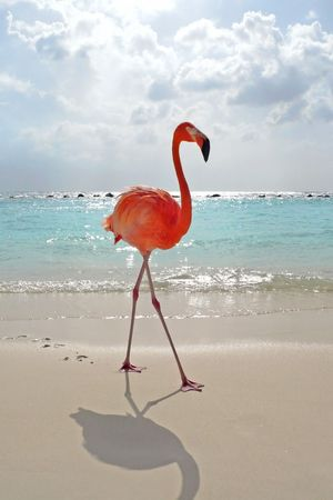 aruba: Flamigo at tropical beach