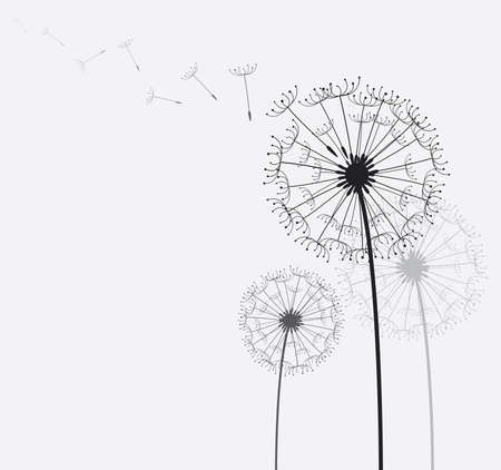 dandelion wind: dandelion in the wind