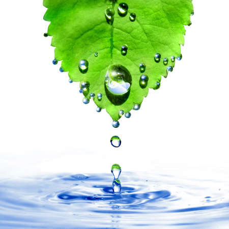 green leaf with water drops and splash isolated on white photo
