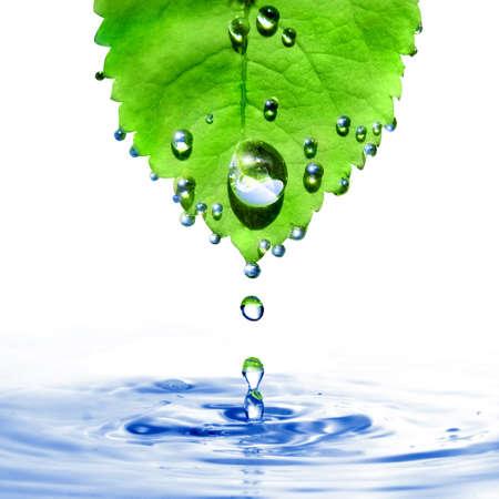 conservacion del agua: hoja verde con gotas de agua y salpicaduras aisladas en blanco Foto de archivo