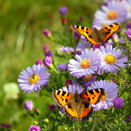 two butterfly on flowers Stock Photo