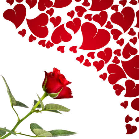 Red rose and hearts for lovers photo