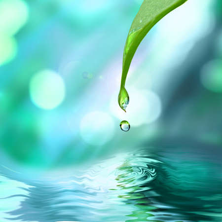 water conservation: green leaf with water drop water on blue sunny background
