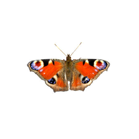 butterfly isolated on white Stock Photo - 4798289