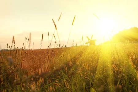 field on sunset Stock Photo - 4798301