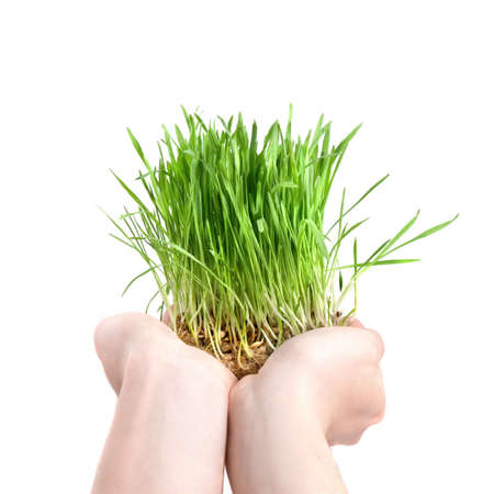 human hand holding green grass on white photo