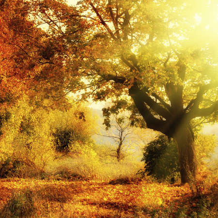 autumn forest with sun beam Stock Photo - 5682927