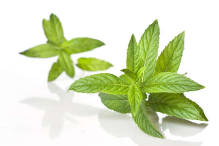 green mint isolated on white Stock Photo - 5682971