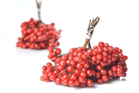 Berries of red Viburnum photo