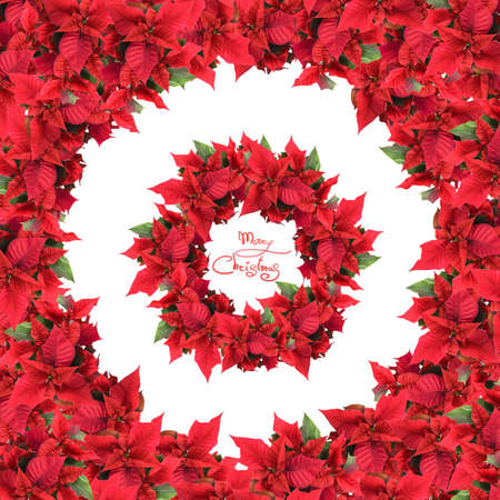 round frame with wreath from christmas flowers isolated on white photo