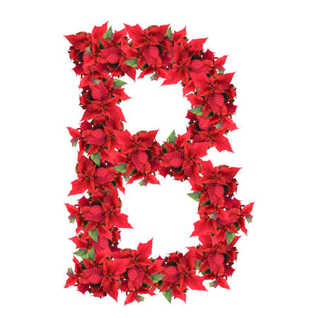 studio b: letter from red christmas flowers isolated on white