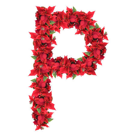 photography backdrop: letter from red christmas flowers isolated on white