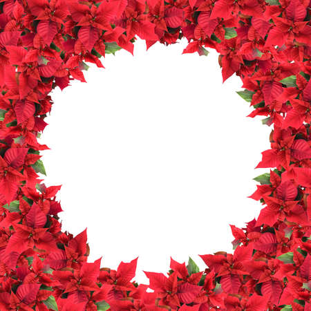 christmas frame from poinsettias isolated on white photo