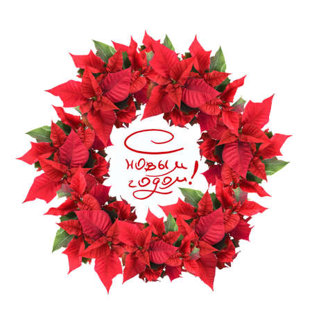 poinsettia: christmas wreath from poinsettia Stock Photo
