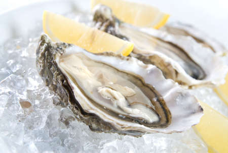 raw oysters with lemon and ice photo