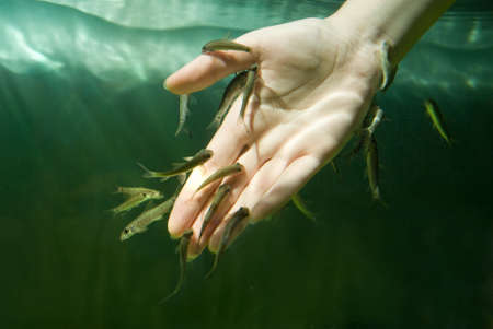 Hand in water with fishes (Fish spa for skin care) photo
