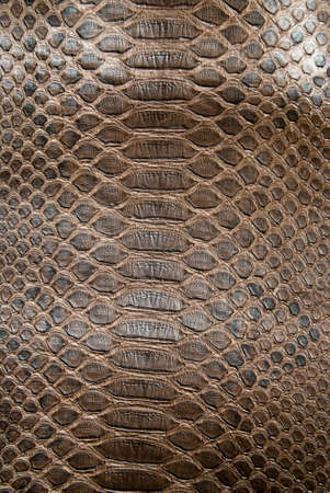 animal scale: brown crocodile texture