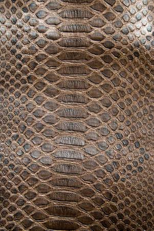 peau cuir: texture crocodile brun