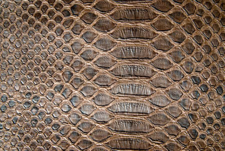 snakeskin: brown crocodile texture