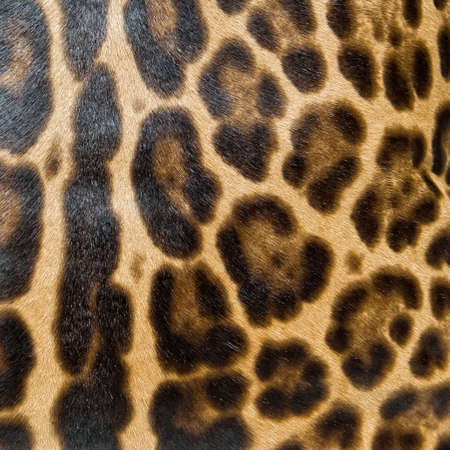 Leopard skin background Stock Photo - 6871049