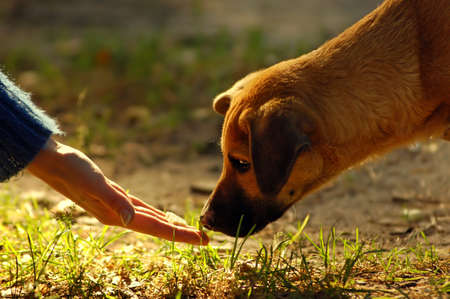 animal feed: dog and hand