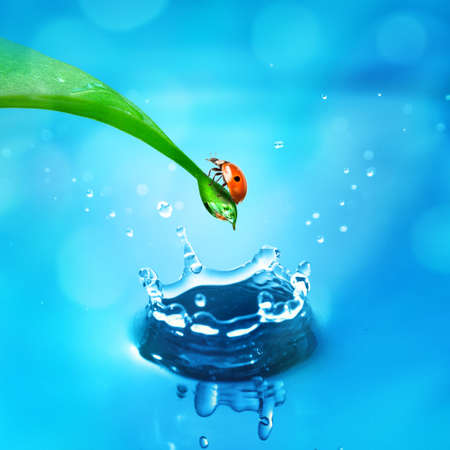 lady bug on green leaf and water splash photo