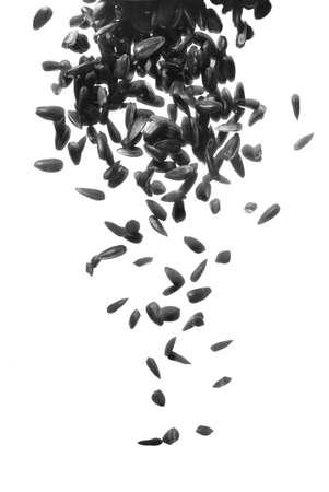 aceite de cocina: semillas de girasol negros cayendo sobre fondo blanco  Foto de archivo