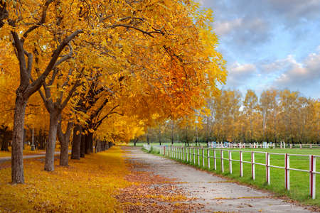 Autumn in a park Stock Photo - 8823148
