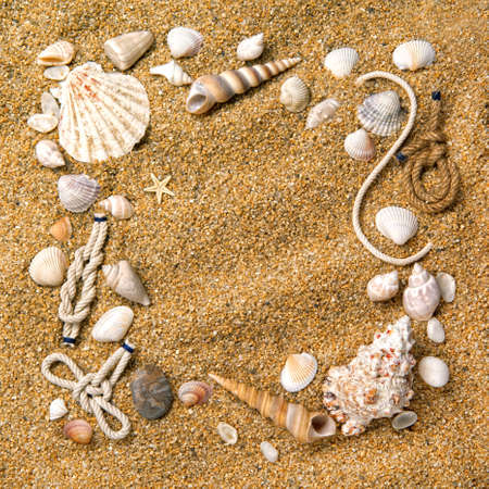 frame from various shells on sand photo