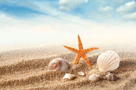 conchas: Conchas de mar sobre la arena contra el cielo azul