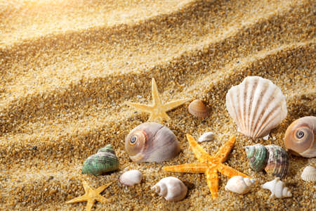 scallop shell: Sea shells on the sand Stock Photo