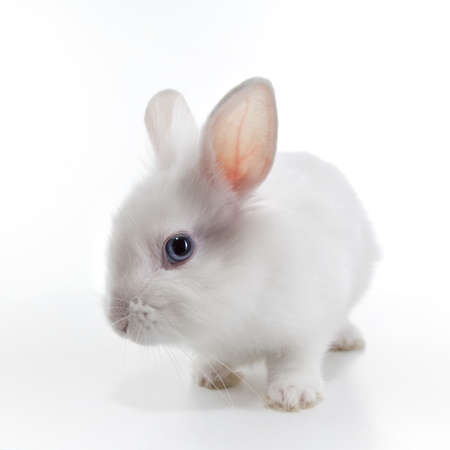 White rabbit isolated on white background Stock Photo