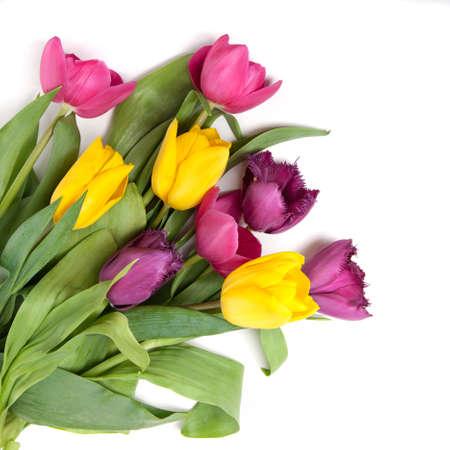 bouquet fleur: tulipes de couleur isolé sur fond blanc